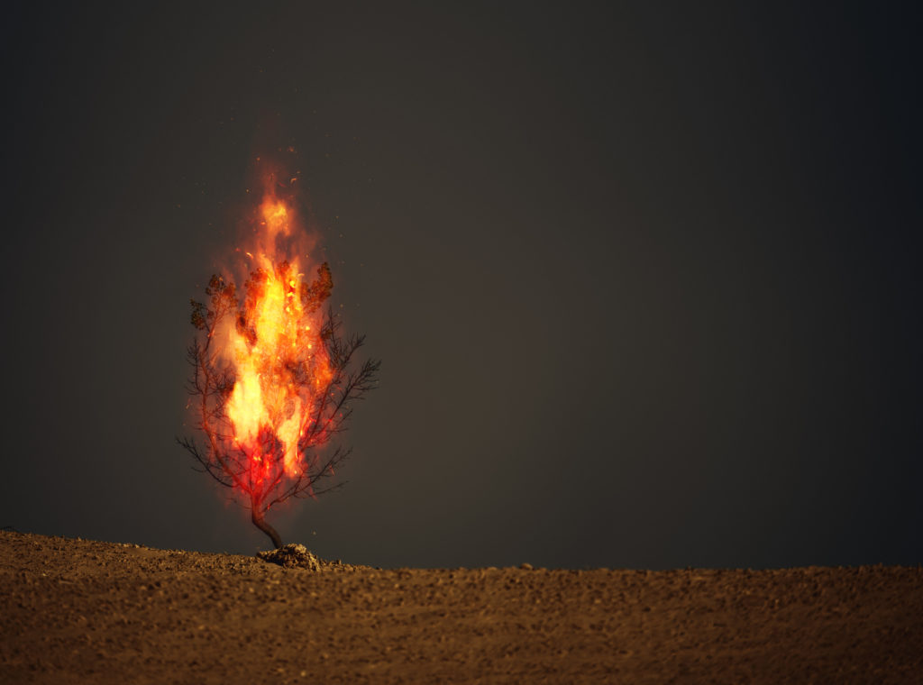 An image of a burning thorn bush in a desert.